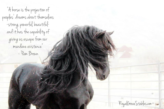 Apollo horse quote2