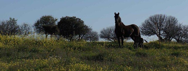 foto caballo 2