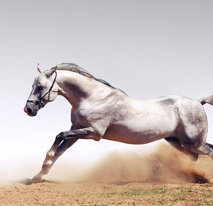 foto caballo 3