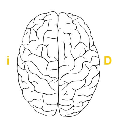brain_es