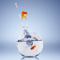 Retaining-talent-goldfish