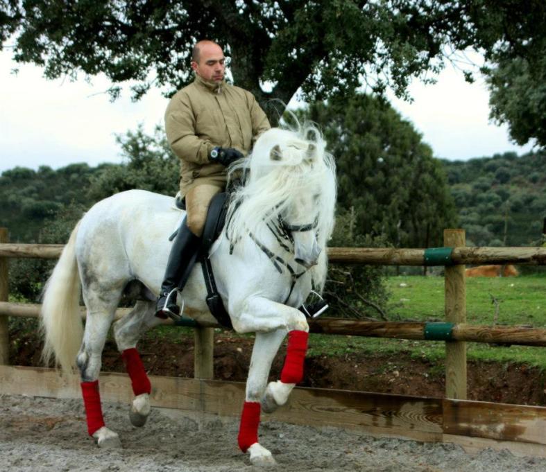 doma caballos julian 1