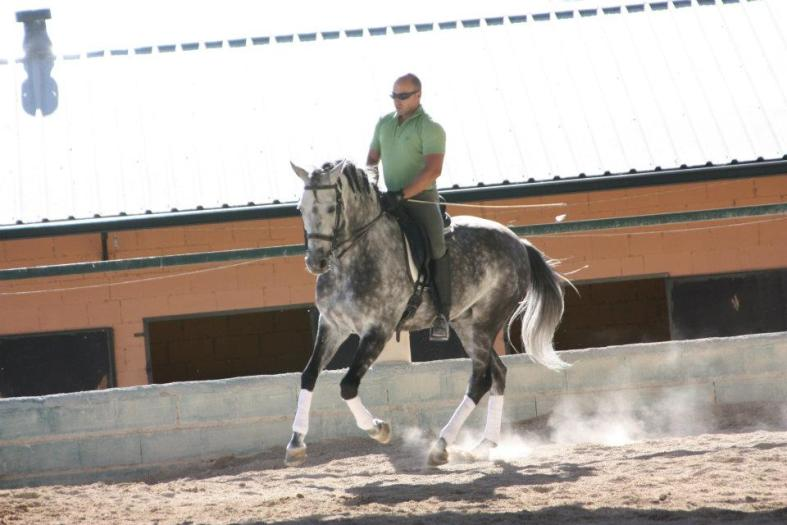 doma caballos julian 3
