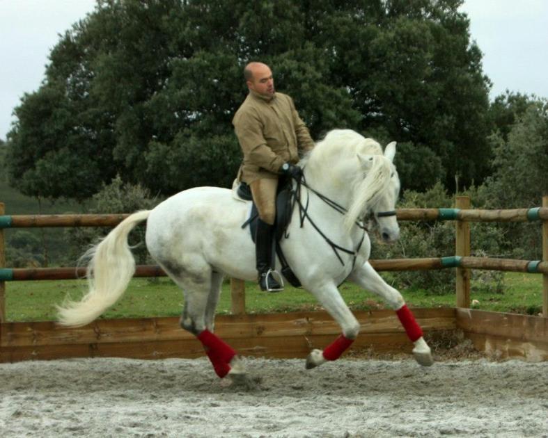 doma caballos julian 6