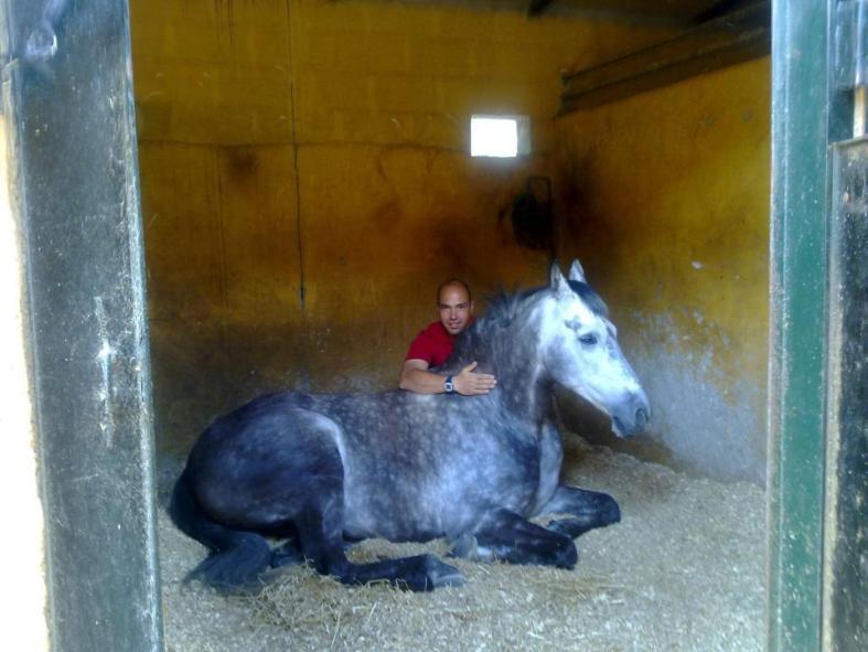 julian y sus caballos