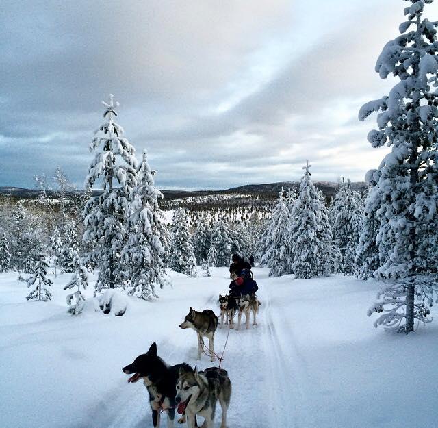 carmina baker en laponia finlandia carrera de trineos con huskies 1