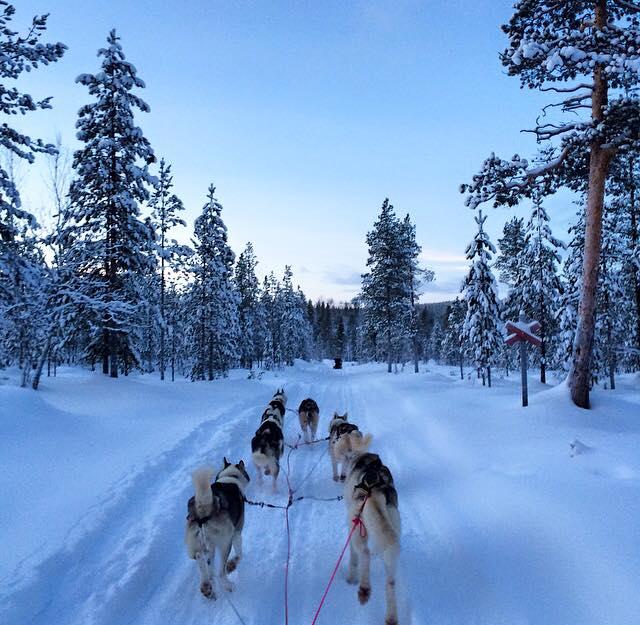 carmina baker en laponia finlandia carrera de trineos con huskies 2