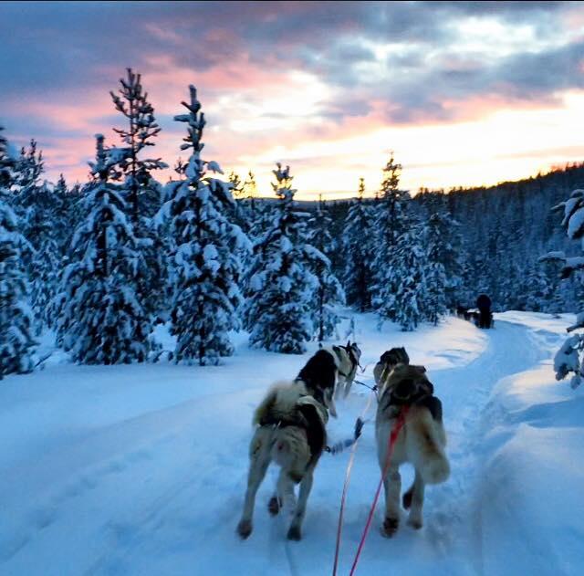carmina baker en laponia finlandia carrera de trineos con huskies